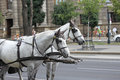 Two horses pulling carriage white retro style on urban street Stock Images