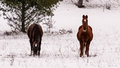 Two horses in a snowy park Royalty Free Stock Photo