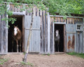 Two horses in stables Stock Image