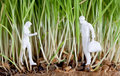 Two human figures in wheat sprouts Royalty Free Stock Images