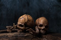 Two human skulls with smoke Royalty Free Stock Photo