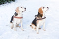 Two hunting dogs sitting together in snow