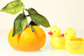 Two interesting ducks and fresh orange on the table Royalty Free Stock Images