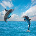 Two  jumping dolphins Stock Image