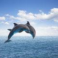 Two jumping dolphins seascape with deep ocean waters and cloudscape Royalty Free Stock Photos