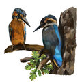 Two kingfishers on a branch