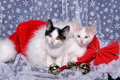 Two Kittens Cuddled in a Santa Hat Royalty Free Stock Image