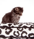 Two kittens on a cushion Royalty Free Stock Photos