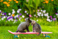 Two kittens kiss on skateboard Royalty Free Stock Photo