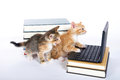 two kittens with laptop computer and books Royalty Free Stock Photo