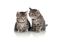 Two kittens pure breed striped british Stock Images