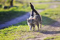 two kitty walking arm in arm through the Sunny green meadow Royalty Free Stock Photo