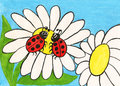 Two ladybirds on camomile, painting Royalty Free Stock Photo
