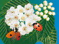 Two ladybirds and white flowers Royalty Free Stock Photo