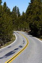 Two lane road curve admidst pine trees in through Stock Images