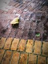 Two leaves on the brick path. Royalty Free Stock Photo