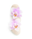 Two light pink orchids and stones isolated on white background. Viewed from above Royalty Free Stock Photo