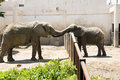 Two like asian chinese beijing zoo playing Royalty Free Stock Photography
