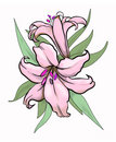 Two lilies illustration Royalty Free Stock Photography