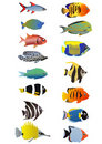 Two line of fishes Stock Photos