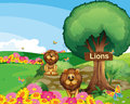 Two lions in the garden with a wooden signboard Royalty Free Stock Photo