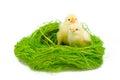 Two littke chicknens Royalty Free Stock Photo