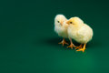 Two littke chicknens Royalty Free Stock Photos