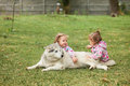 The two little baby girls playing with dog against green grass Royalty Free Stock Photo