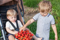 Two little brother boys with bowl strawberries Stock Photo