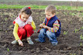 Two little children planting seeds Royalty Free Stock Images