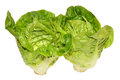 Two little gem salad lettuce isolated white background Royalty Free Stock Image