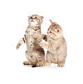 Two little kittens playing together Royalty Free Stock Image