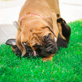 Two little puppies Royalty Free Stock Image