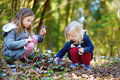 Two little sisters picking the first flowers of spring Royalty Free Stock Photo