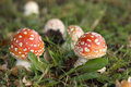 Two little toadstools in the grass Stock Images