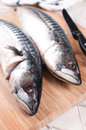 Two mackerel raw fish heads closeup vertical Stock Images