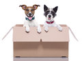 Two mail dogs in a brown moving box Stock Photography
