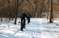 Two men on fat-bikes ride in winter forest Royalty Free Stock Photo