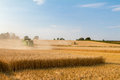 Two modern combine harvester cutting crops corn wheat barley working golden field Royalty Free Stock Photo