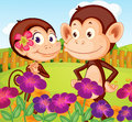 Two monkeys at the garden in the hilltop illustration of Stock Photo