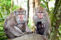 Two mothers with babys in monkey Forest Stock Images