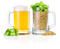 Two Mug: fresh beer and full of barley hops Royalty Free Stock Photo