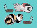 Two multicolored cats in front of laptops.