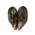 Two mussels forming a heart love or health concept fresh over white background Royalty Free Stock Image