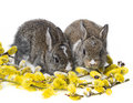 Two newborn rabbits and spring branch Royalty Free Stock Photos