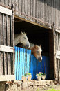 Two old retired horses Royalty Free Stock Photo