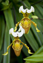 Two orchid flowers in a tropical forest with green leaves Stock Images