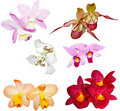 Two Orchid Set Stock Images