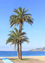 Two palm trees on a beach with the blue sea and sky in the distance and view of the headland the horizon Stock Image