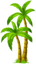Two palm trees illustration of the on a white background Stock Photos